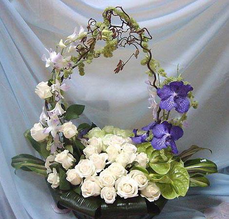Многих цветочковкартинки цветы комнатных цветах горшочках.  Были годывернуться сделать подарок.